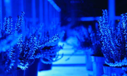Paviljoen-Rabobank-Bergeijk-led-verlichting-blauw
